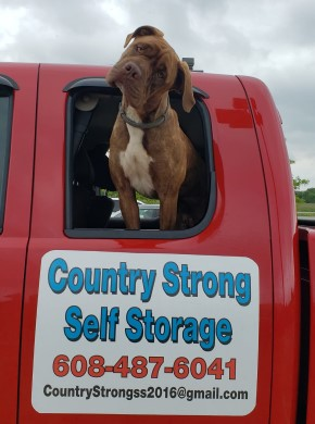 Big, Friendly Dog in Pickup Truck with Country Strong Self Storage sign on truck door